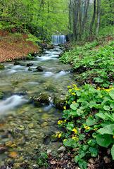 Belianský Potok
