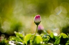 ...sama v tráve...