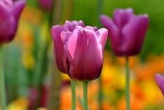 ...príchod jari...