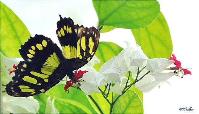 zátišie s motýľom