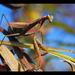 nepekný hmyz