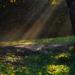 slnko v lese