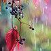 farebný dážd