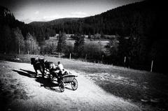 v záprahu na ranči