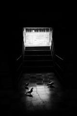 spadnuté svetlo