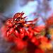 maliar jesen