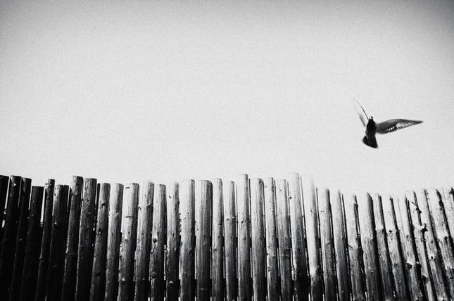 volnosť