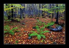 Lesné zátišie 1