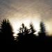 Aura stromov