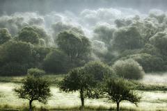 Les dýcha II