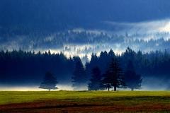 Les dýcha.