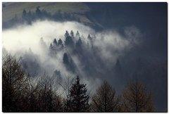 Les dýcha