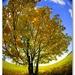 Strom na lúke