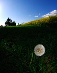 Púava v tráve