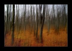 Chvenie lesa