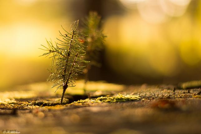 Strom na strome