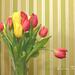 Tulipánová...
