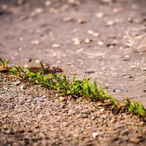 Zivot v asfalte
