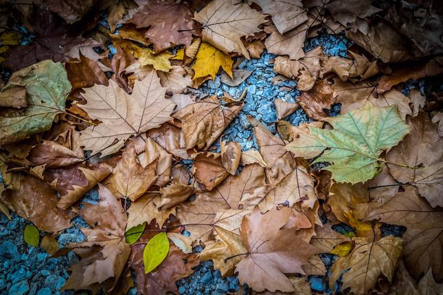jesenná podlaha