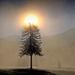 Krajina svetiel