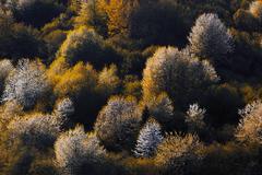 Krajina farieb