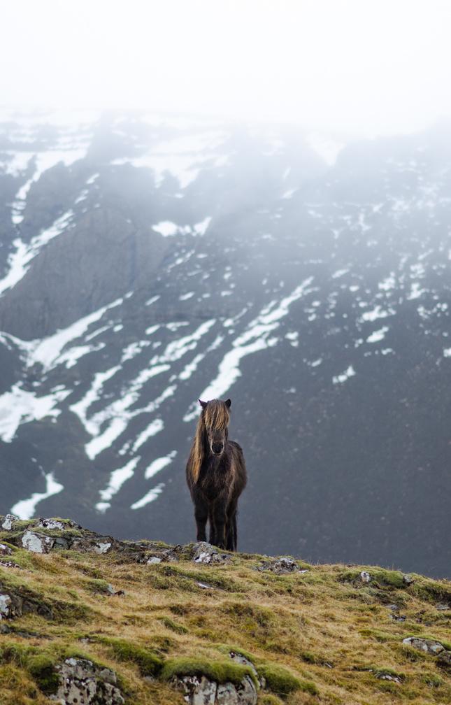 Strážca hory