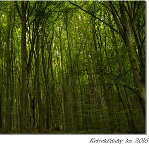 Krivoklátsky les