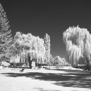 V tieni stromov