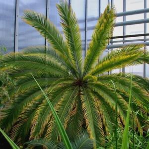 Exotika v botanickej