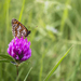 Ďatelina a motýľ