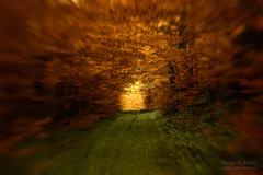 lesna cesta