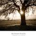 sun between branches