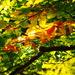 Jeseň v korunách