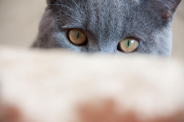 Iam watching you!