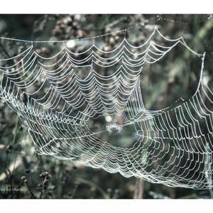 ...web ...