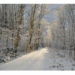 ... krásy zimy ...