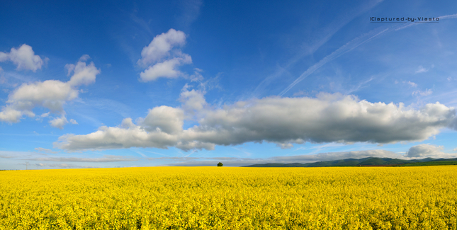 ... fields of spring II ...