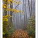 ... misty path...