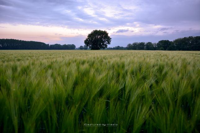 ... field of silence ...