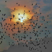 vtáčí podvečer