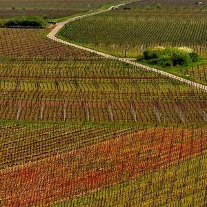 geometria vinohradov