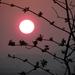 Západ slnka na jar