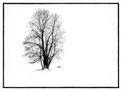 Zimná samota