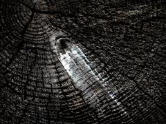 Krajina dreva 34