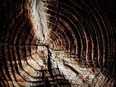 Krajina dreva 28