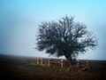 Sám strom v poli
