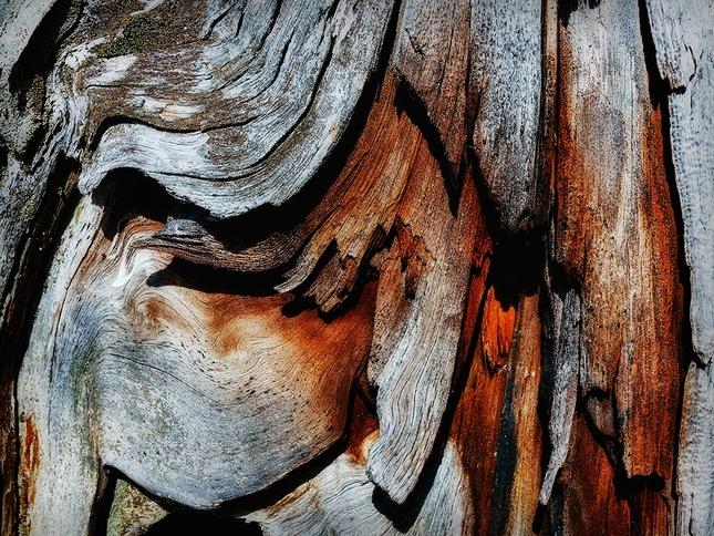 Krajina dreva 29