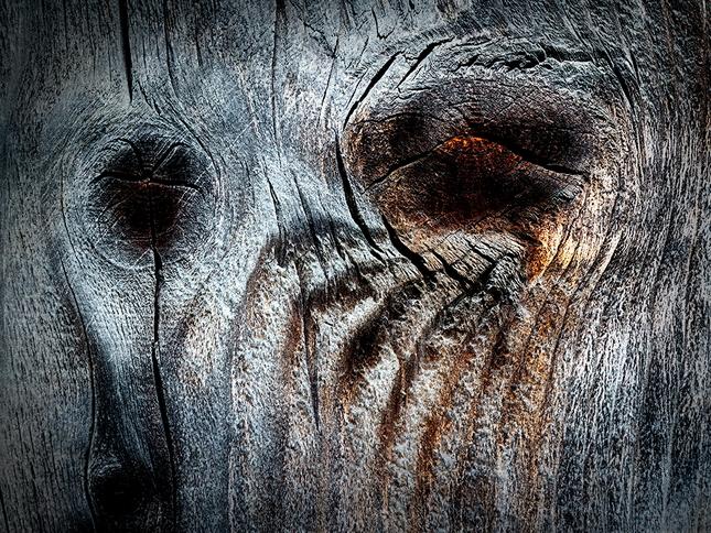 Krajina dreva 24