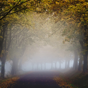Jesenné objatie