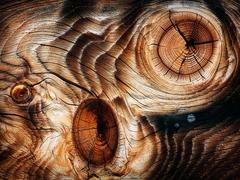 Krajina dreva 31